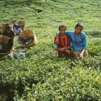 tea-garden-awesome-nepal